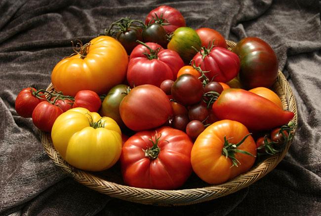 Сорта желтых томатов: описание и урожайность лучших сортов