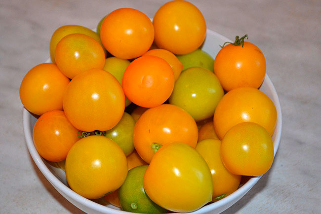 Томат Абрикос характеристика и описание сорта отзывы садоводов с фото